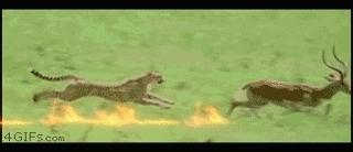 michaelbaygifs, bay leopard GIFs