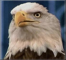 Watch dramatic eagle GIF on Gfycat. Discover more related GIFs on Gfycat