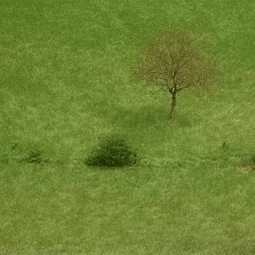 Watch and share Grass Waves (i..com) GIFs on Gfycat