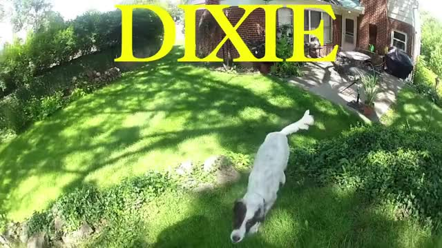 Watch and share Dixie GIFs on Gfycat