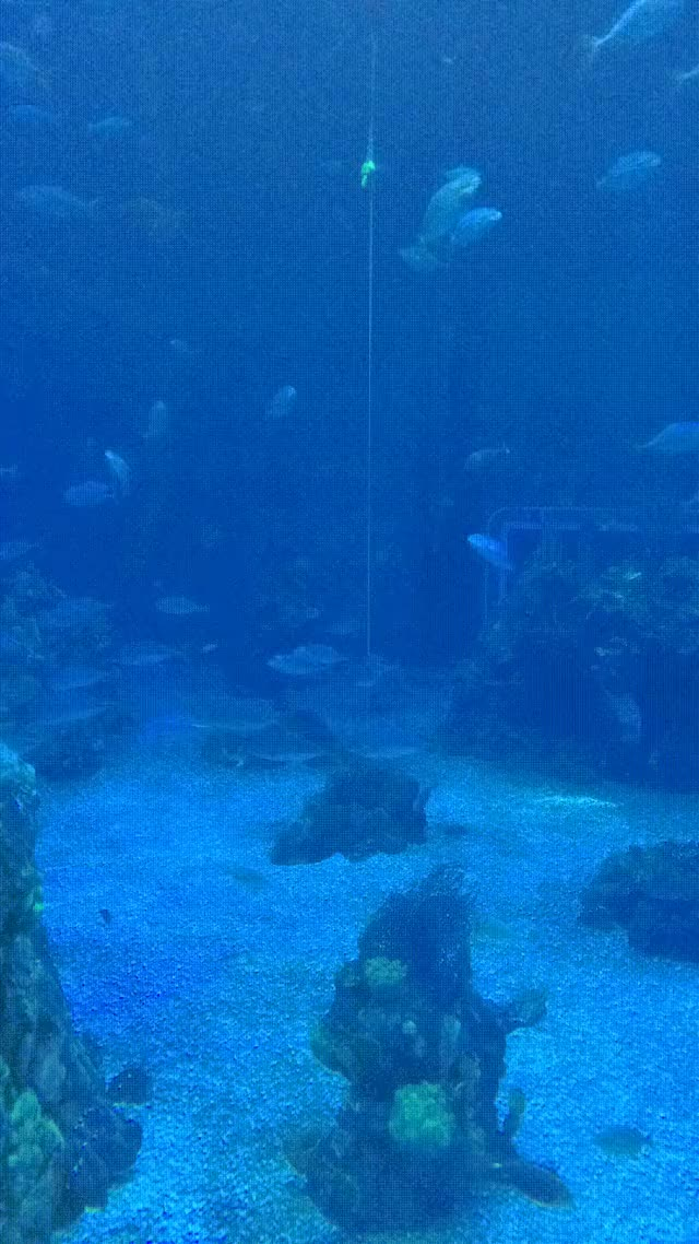 Watch and share Aquarium Timelapse GIFs on Gfycat