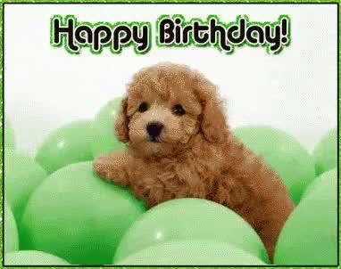 Watch and share Birthday Dog GIFs on Gfycat