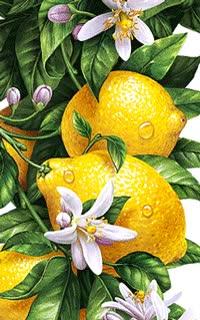 Watch and share Lemons. GIFs on Gfycat