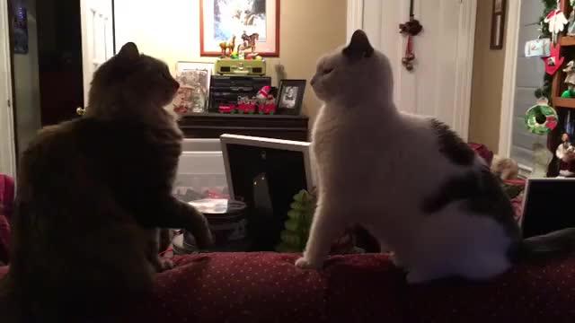 Watch Video by sokeyg GIF by awkwardtheturtle on Gfycat. Discover more awkwardtheturtle GIFs on Gfycat