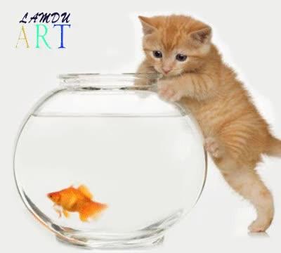 Watch and share Riêng Con Mèo Cử Động Thì VàoLiquifylàm Biến Dạng Theo...kịch Bản GIFs on Gfycat