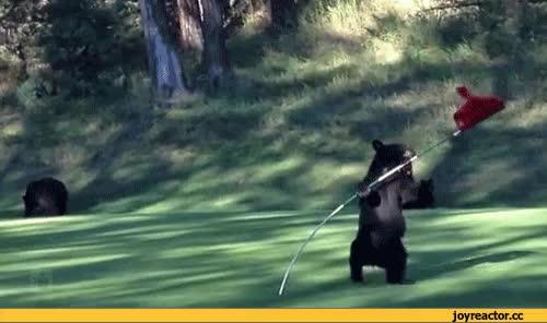 Watch and share Гиф Анимация,гифки - ПРИКОЛЬНЫЕ Gif Анимашки,медведь,флаг,песочница GIFs on Gfycat