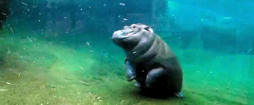 Watch and share Hippopotamus GIFs and Hippo GIFs on Gfycat