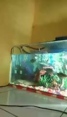 Watch and share Ripsave - Nice Aquarium - A8f332b3b42d74879098c633eecd5c33 GIFs on Gfycat