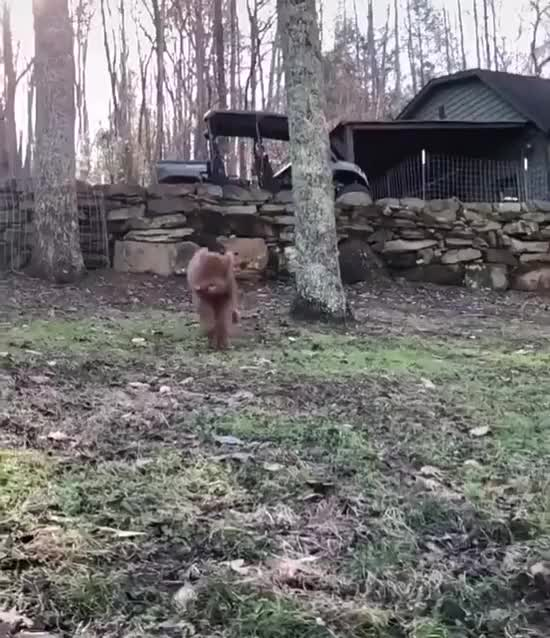 Watch and share Jumping GIFs and Zoomies GIFs by lnfinity on Gfycat