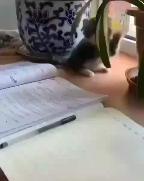 "aw, aww, cats, cute, kitten, smol, Lovely Cats on Instagram: ""Let me help ya with the homework🤣🐾🤣"" GIFs"
