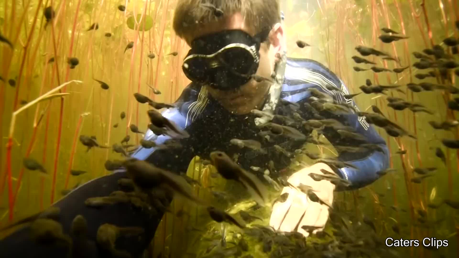 Daily Dose of Internet, nature, Diver Discovers Tadpole Paradise GIFs
