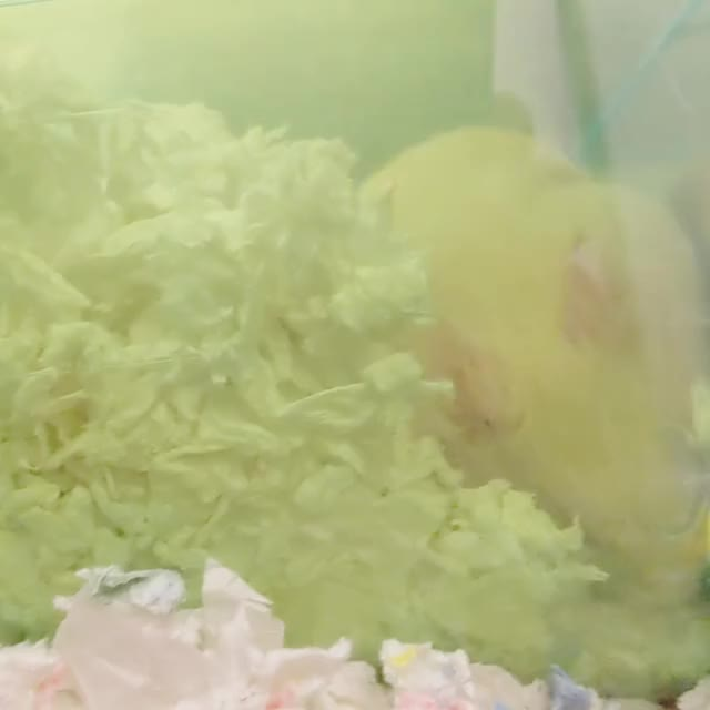 Watch and share Hamster GIFs by VP on Gfycat