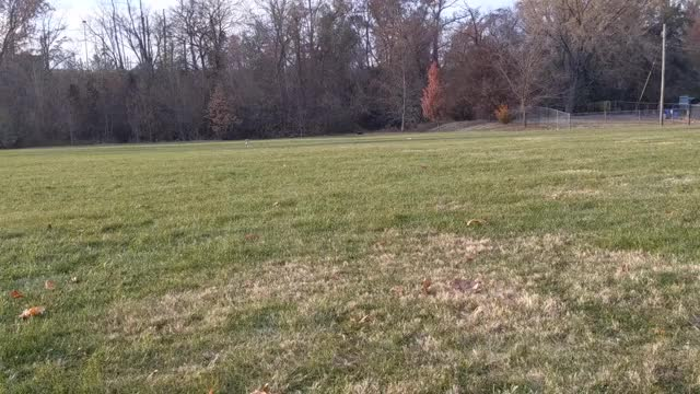 Watch and share Chewie Had A Great Time At The Park Today! GIFs by Supremegalacticgod on Gfycat