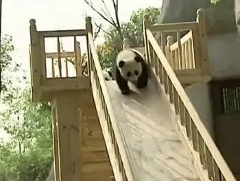 Panda slide : gifs GIFs
