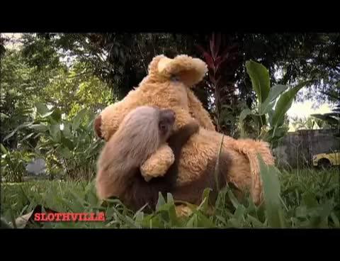 animal, animals, cute, sloth, Sloth GIFs