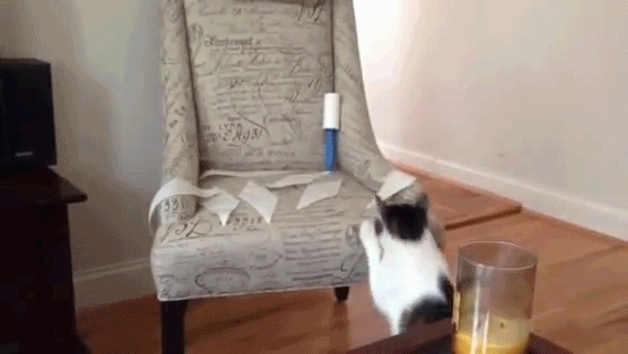 catpranks, instant_regret, Get it off! (reddit) GIFs