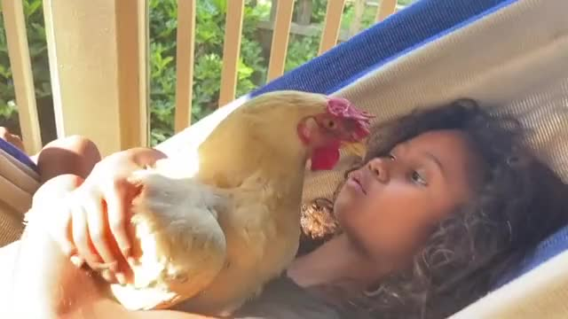 Watch and share Henrietta The Happy Hen Being Hugged In A Hammock GIFs by lnfinity on Gfycat