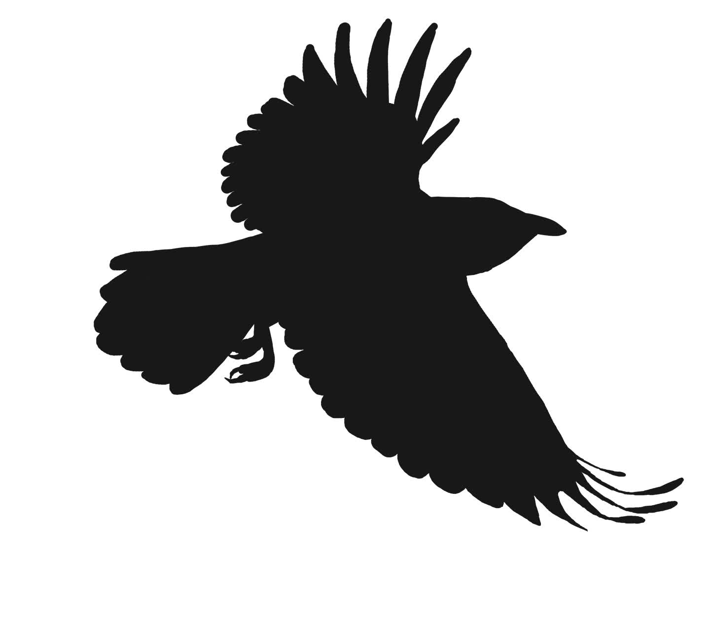 Crow GIF by Enviousmonster on deviantART GIFs