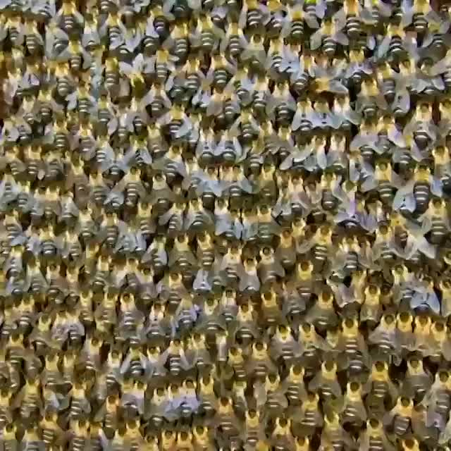 Watch and share Bees GIFs by GB on Gfycat