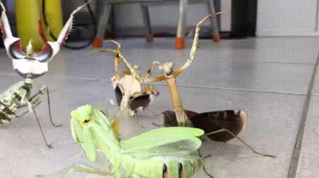 Watch and share Большие-гифки-гифки-живность-насекомые-4218751 GIFs by giho13 on Gfycat