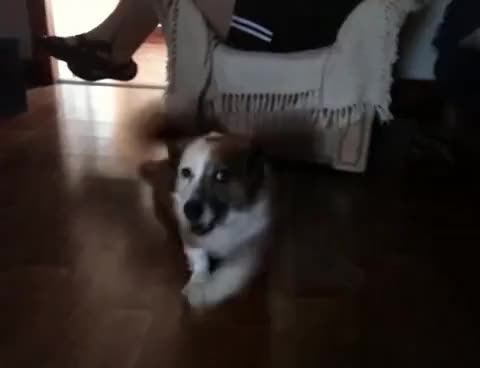 Watch Louie GIF on Gfycat. Discover more Louie, dog GIFs on Gfycat