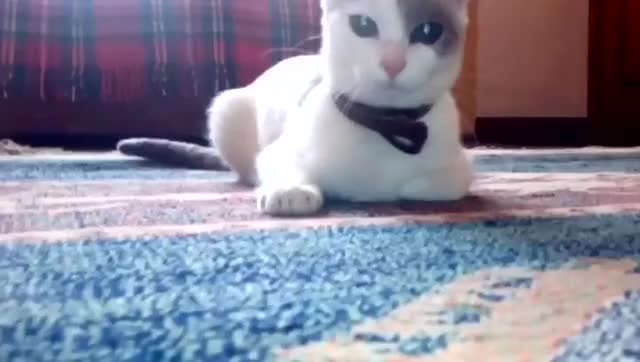 Watch and share Cat Is Gazing At You GIFs by Ah Negão on Gfycat