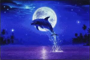 Watch and share Dolphin Colorful.gif GIFs on Gfycat