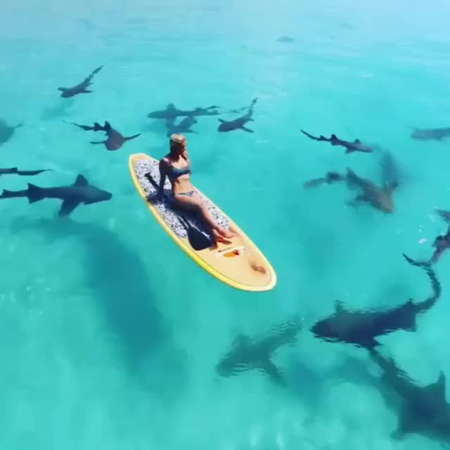 Watch and share Calm Blue Ocean GIFs by likkaon on Gfycat