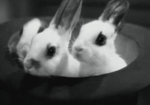 Watch this bunny GIF on Gfycat. Discover more animals, bunnies, bunny, cute, rabbit GIFs on Gfycat