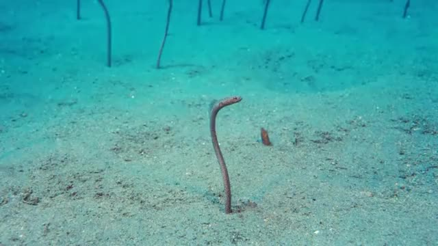 Watch and share ???? Garden Eels GIFs by likkaon on Gfycat