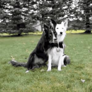 adorable, awww, best friends, cute, dogs, hug, precious, sweet, Dog Hug GIFs