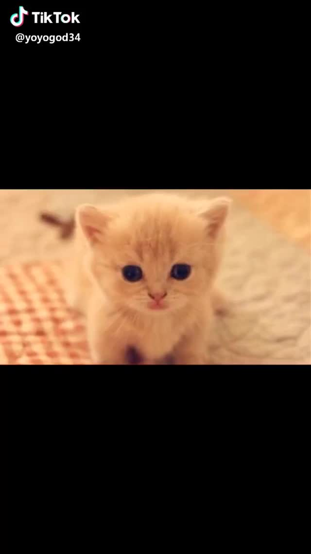 Watch and share Cutcat GIFs by interesting on Gfycat