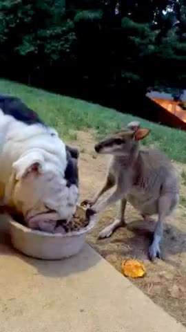 Watch and share Kangaroo GIFs on Gfycat