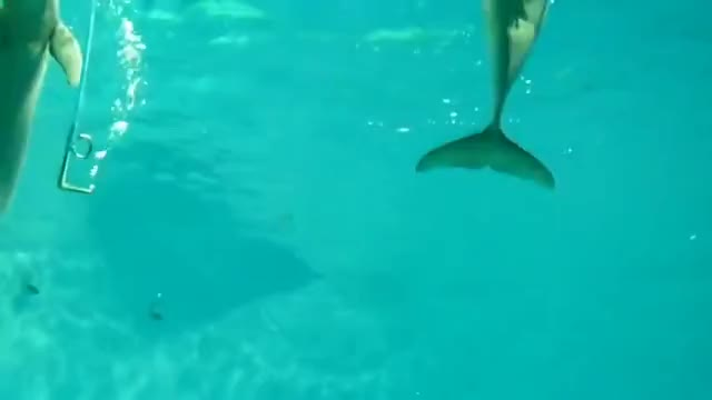 Watch and share Bubble Rings GIFs and Porpoise GIFs by Slim Jones on Gfycat