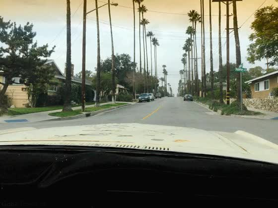 Watch and share Palm GIFs on Gfycat
