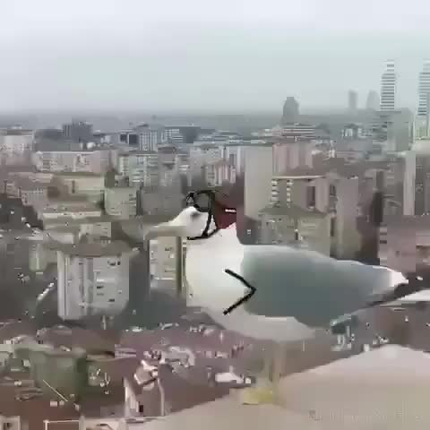 doodle, funny, Seagull mission (@jimmy.something) GIFs
