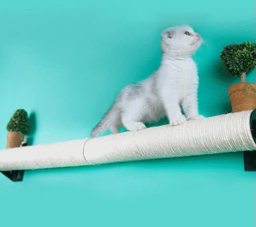 Watch and share Cat Sisal Post Wall & Cage Mounted Scratching Post GIFs on Gfycat