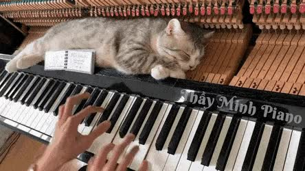 Watch Cat getting bach rubs GIF on Gfycat. Discover more related GIFs on Gfycat