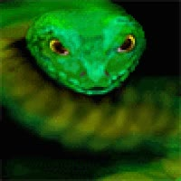 Watch and share Animated Snake Photo: Snake 2.gif GIFs on Gfycat