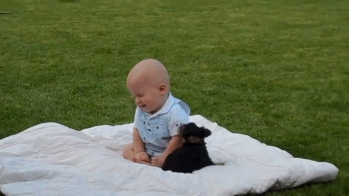 Whatcouldgowrong, tarantinogifs, Puppies new favorite chew toy GIFs