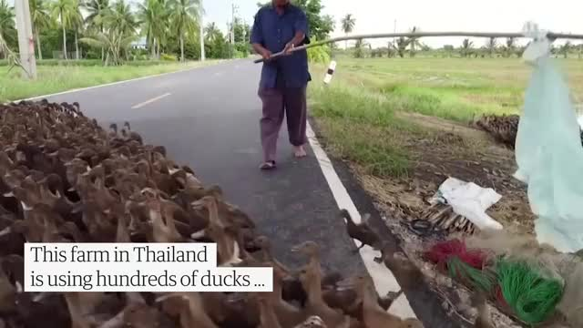 Watch and share Ducks GIFs on Gfycat