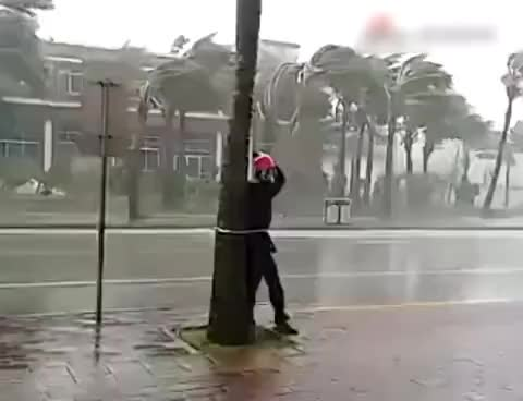 "Watch Raw Video: Reporter ties himself to tree to cover Typhoon ""Kalmaegi"" GIF on Gfycat. Discover more related GIFs on Gfycat"