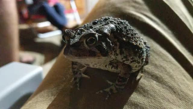 Watch and share Froggo GIFs on Gfycat