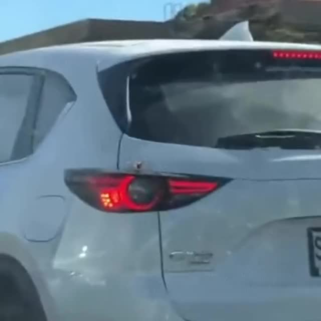 Watch and share Bug Slip Into Car Unnoticed GIFs on Gfycat