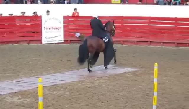 Watch and share Campeonato De Caballos Trote Y Galope. Sibaté Cundinamarca GIFs on Gfycat