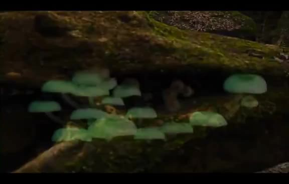 Stunning timelapse of bioluminescant mushrooms! GIFs