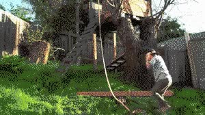 Watch Physics GIF on Gfycat. Discover more related GIFs on Gfycat