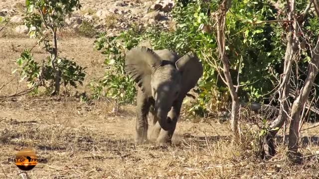 Watch and share Funny Baby Elephant GIFs on Gfycat