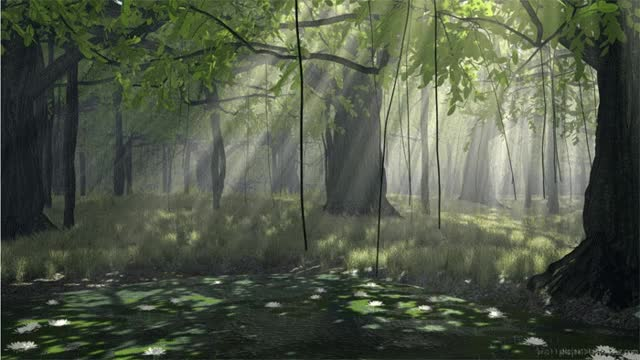 Watch and share Forest GIFs on Gfycat