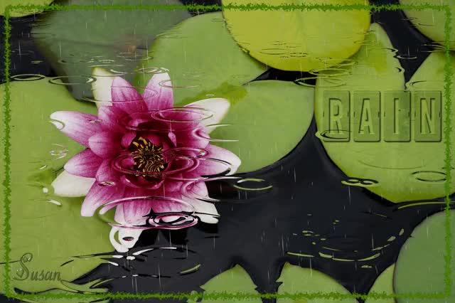 Watch Flor en la lluvia GIF by Susan (@susanlu4esm) on Gfycat. Discover more gif lluvia GIFs on Gfycat